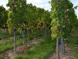 Fruitpaleis - Knokke - Wijn