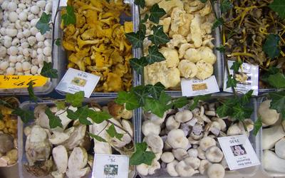 FruFruitpaleis - Fruit & groenten